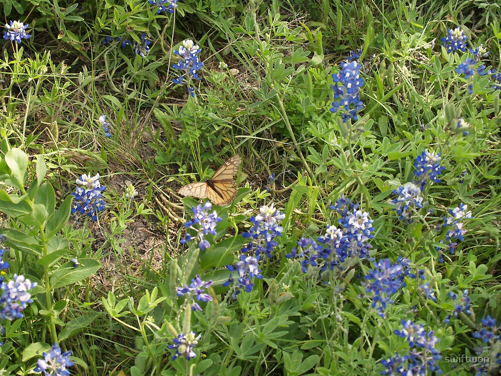 bluebonnets by swiftwon