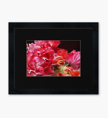 Happy Rose Family Display Framed Print