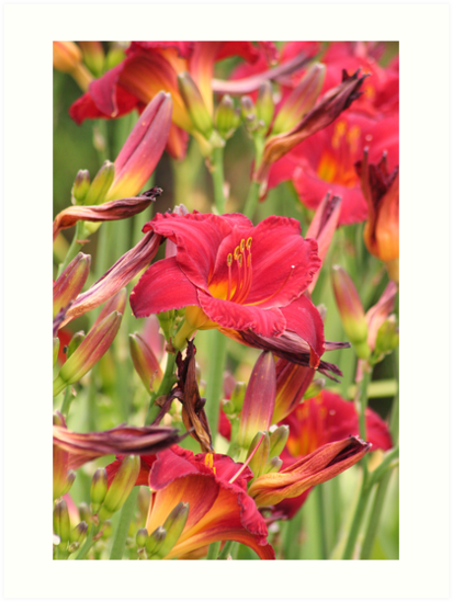 RED LILIES by mlynnd