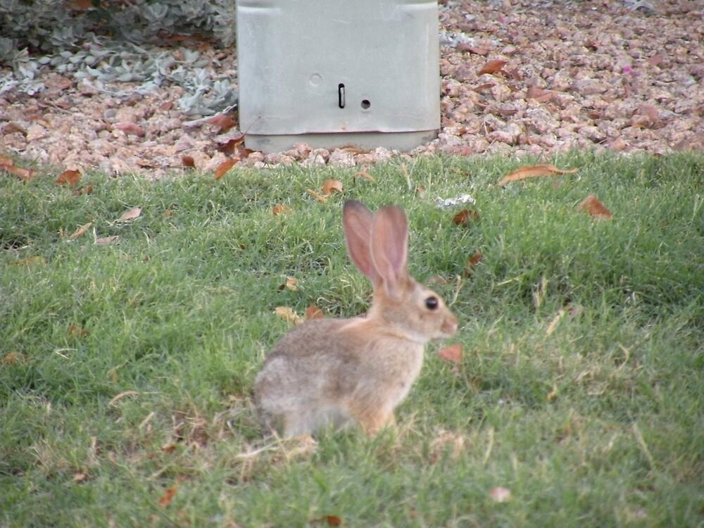 Rabbit fun in the yard by Bonnie Pelton