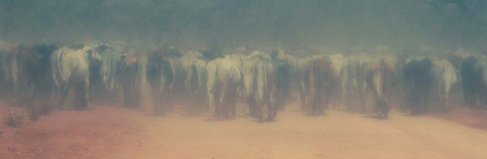 More cattle dust by Pearlie
