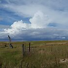 Gathering Storm across the Paddocks close to Home. Mt. Pleasant.  by Rita Blom