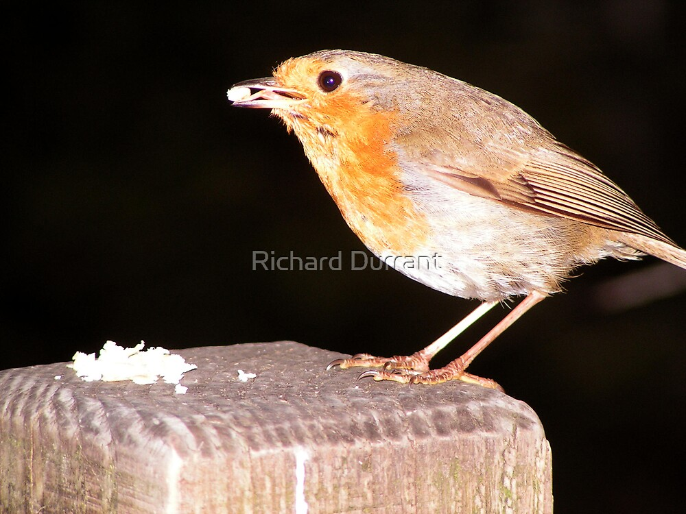 Robin In Darkness by Richard Durrant