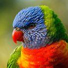 Rainbow Lorikeet in profile by theleastone