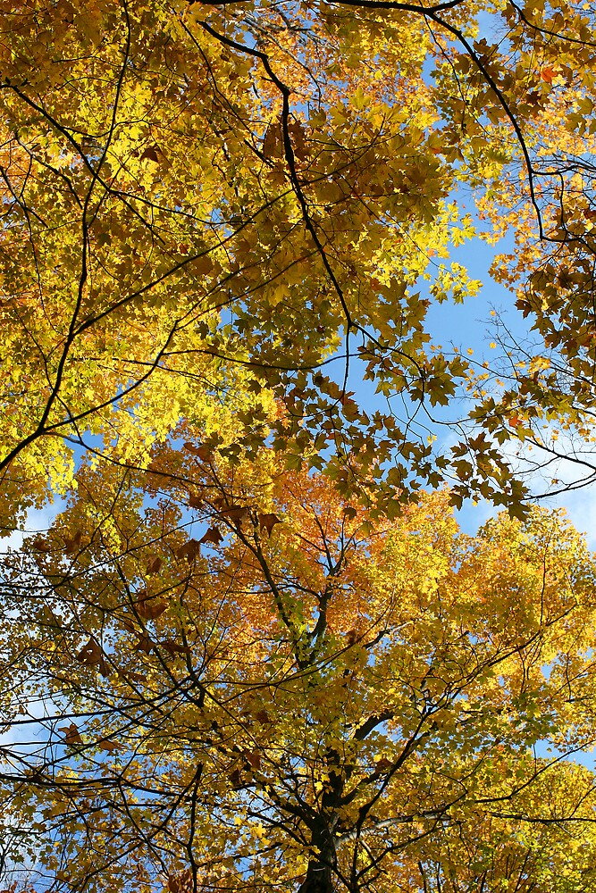 Blue Skies and Yellow Leaves by Kurt Kamka