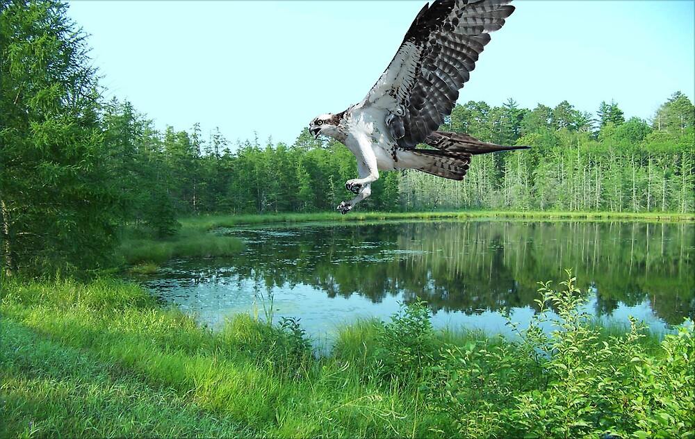 1038-Raptor Lake by George W Banks