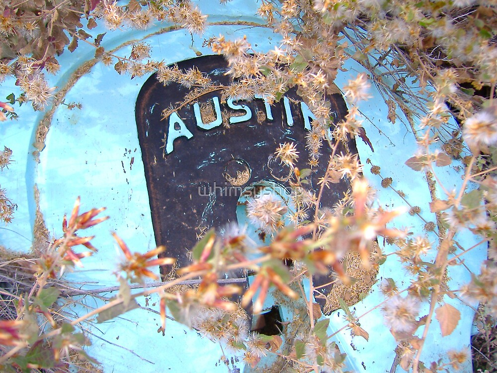 Austin by whimsyshop