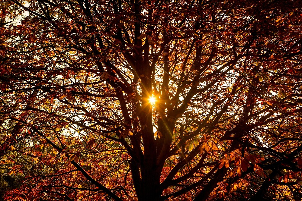 Autumn Light. by Dave Hare