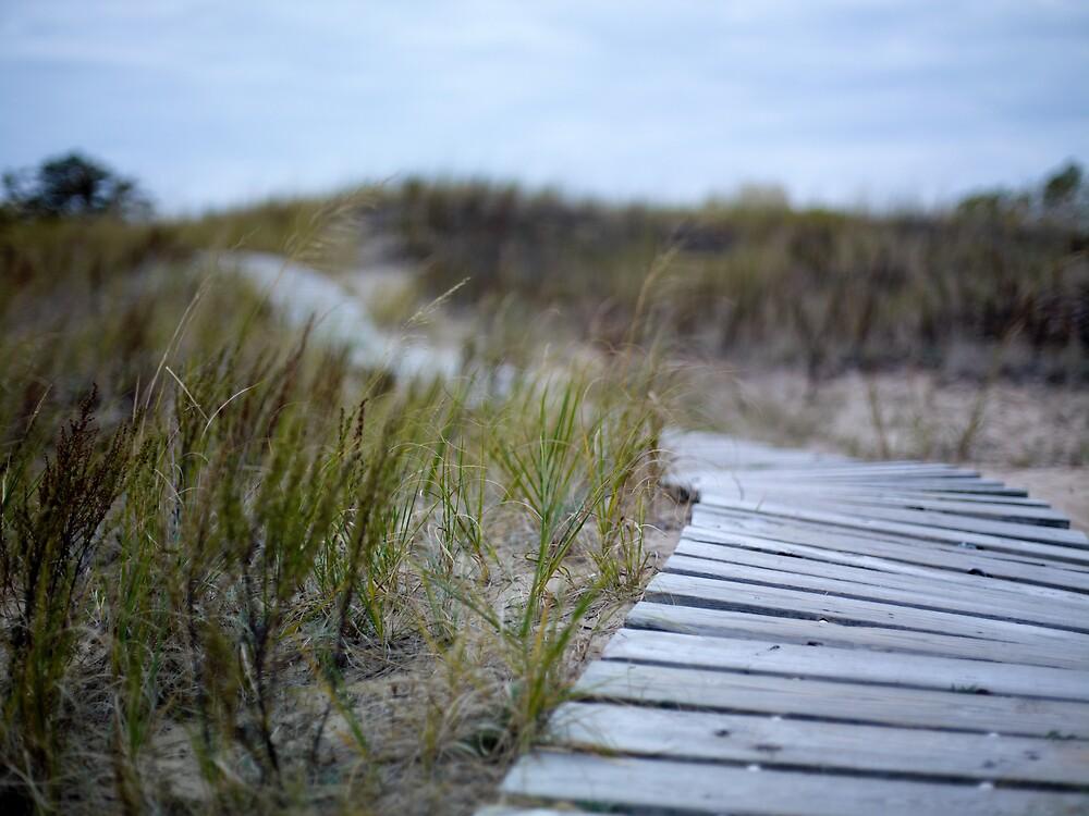 Dune Boardwalk by Kurt Kamka