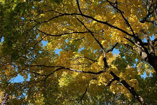 New York Autumn by MiLa