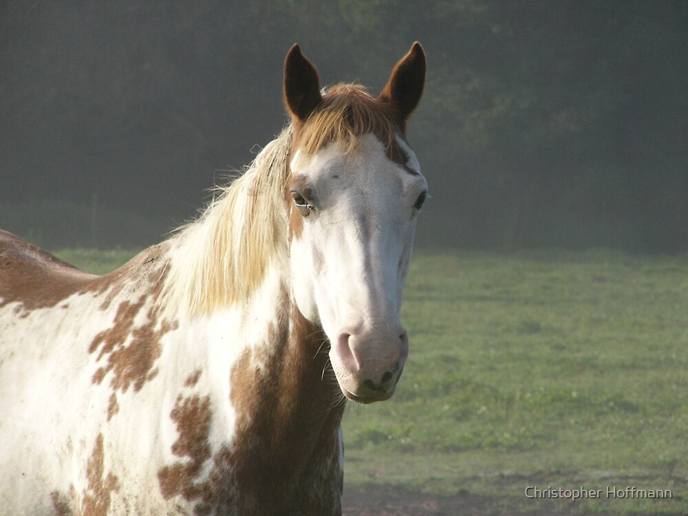 Our beautiful Paint Horse in the morning fog by Christopher Hoffmann