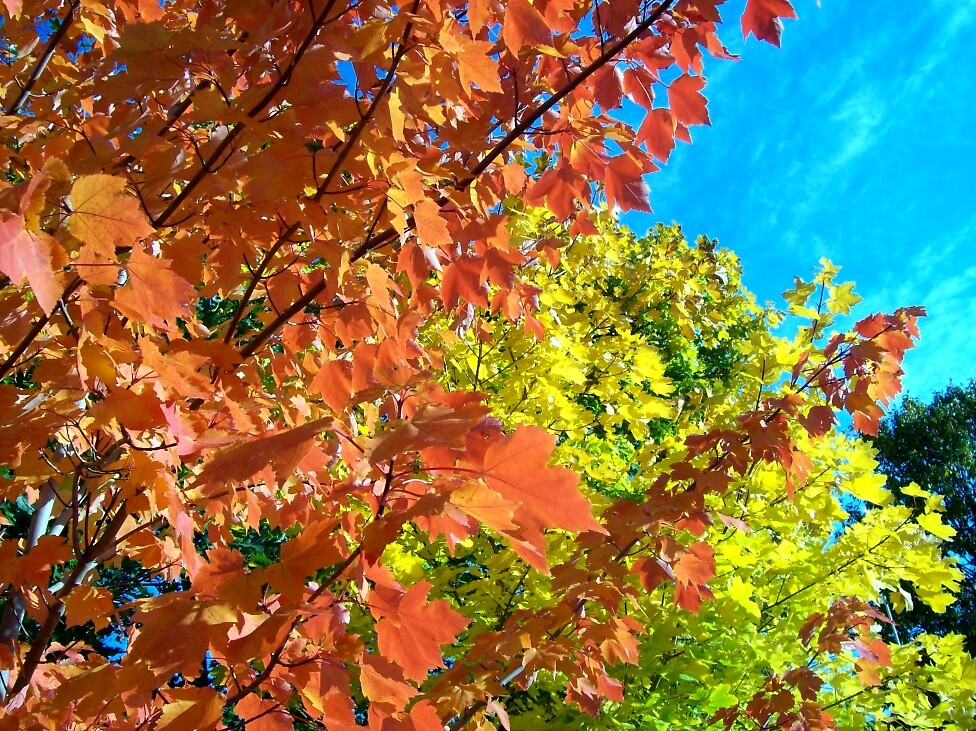 Fall color 3 by Jimmy Joe