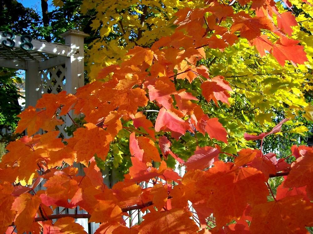 Fall color 6 by Jimmy Joe