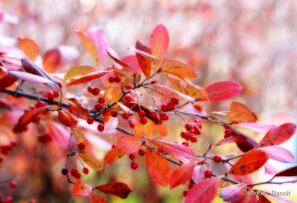 Fall Berries by Deborah  Benoit