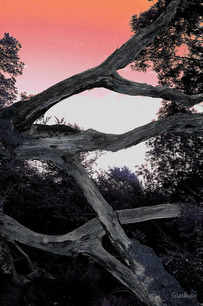 Tree in red sky by Gladkaa