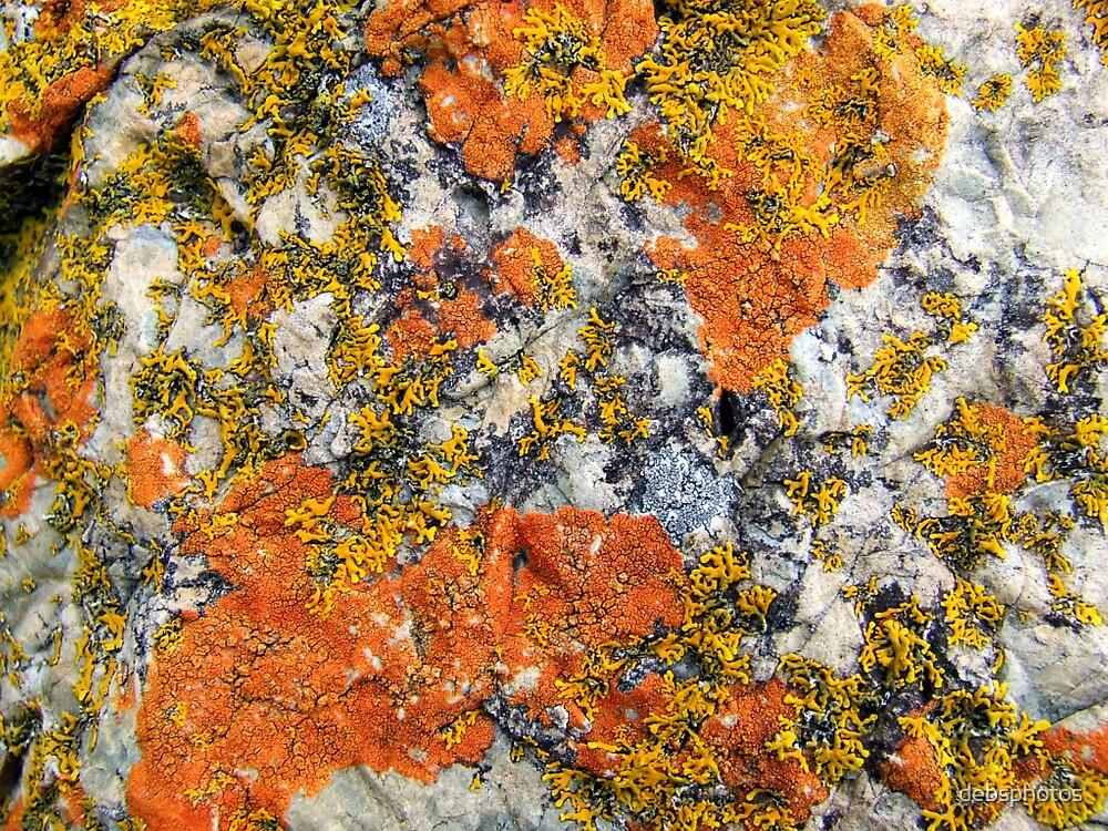 """""""Beach Lichen"""" by debsphotos"""