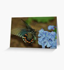 Blue Morpho Greeting Card