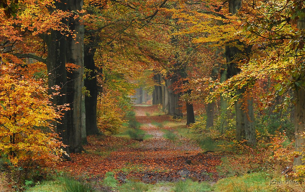 Let us walk on another autumnal lane by jchanders