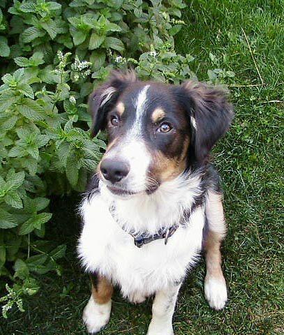 Buddy The Puppy by Edward Henzi