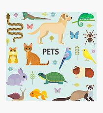 Pets Collection Photographic Print