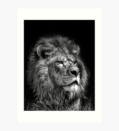 Proud Young Lion Art Print