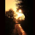 Silhouette lane by bared