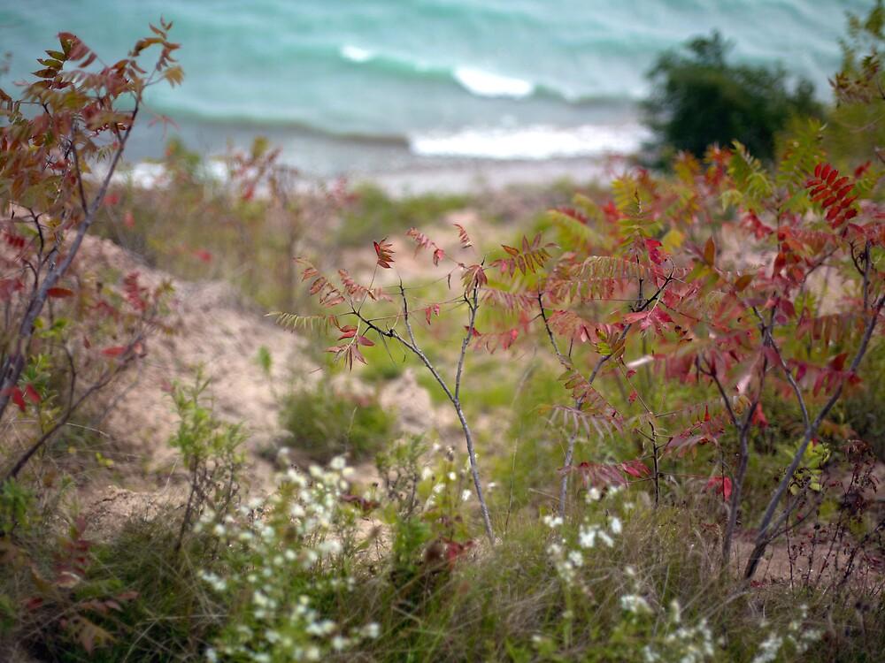 Colorful Shoreline by Kurt Kamka