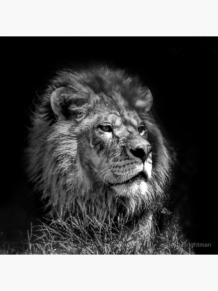 Proud Young Lion by BBrightman