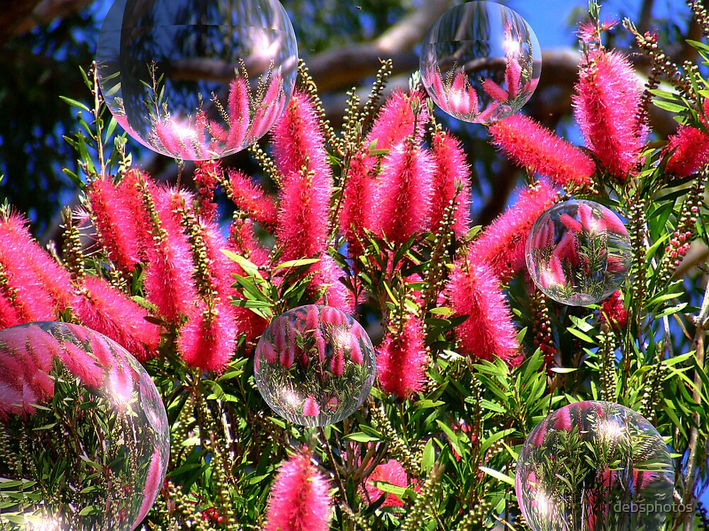 """""""Bottlebrushes & Bubbles"""" by debsphotos"""