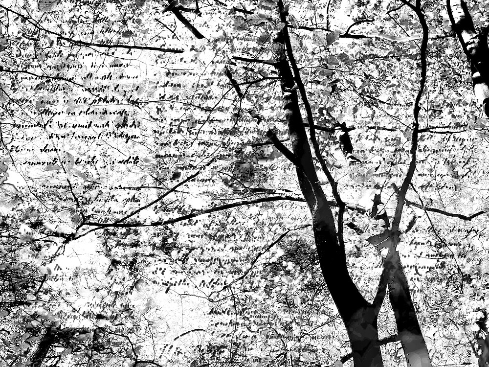 letter from the trees by alaskaman53