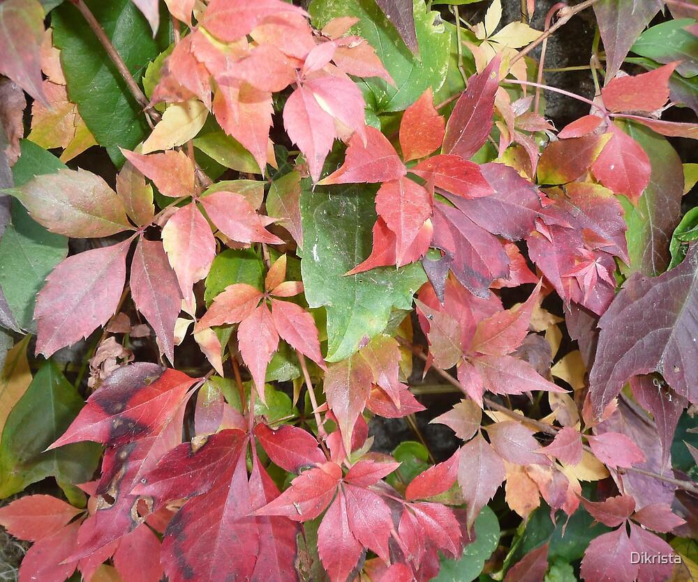 An autumn2 by Dikrista