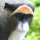 De Brazz's Monkey by Steve Bullock