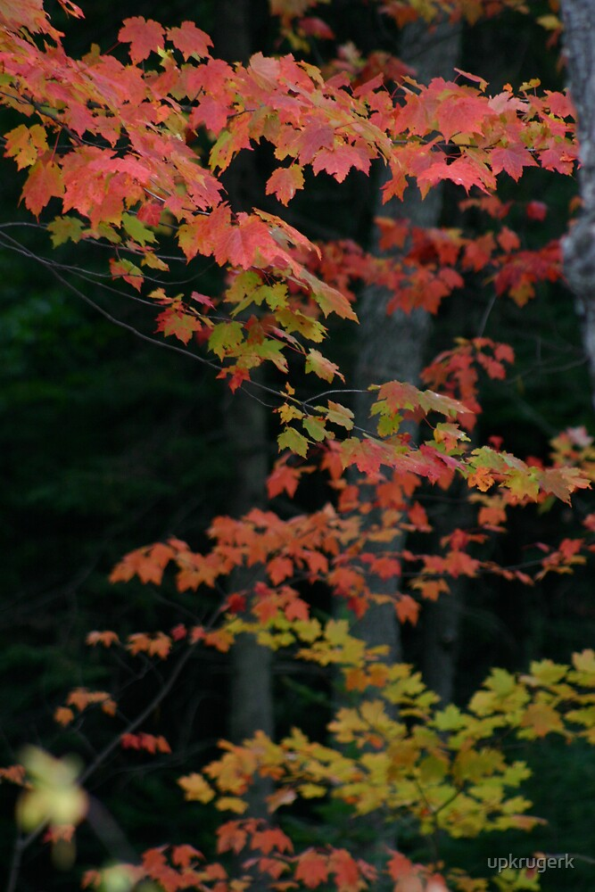 Autumn in the U.P. by upkrugerk