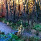 River Devon in Clackmannan by Jeremy Lavender Photography