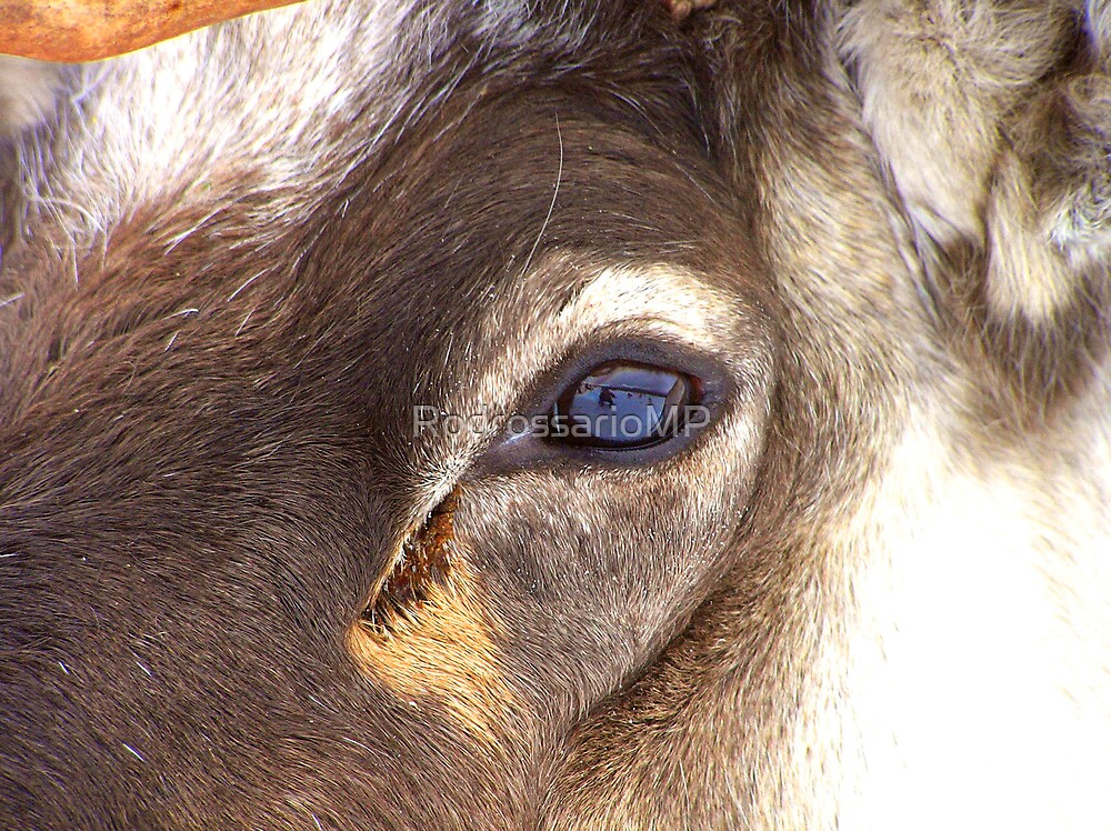 A Reindeers Eye on the World by RodrossarioMP