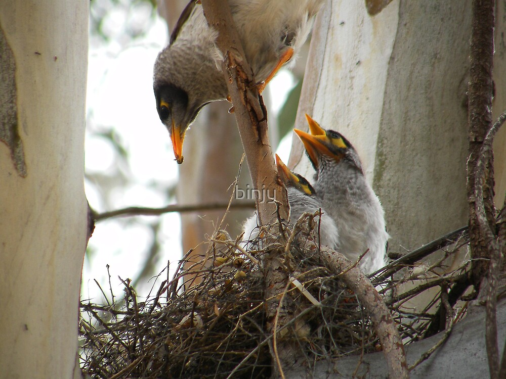 Motherhood- for the birds . by binjy