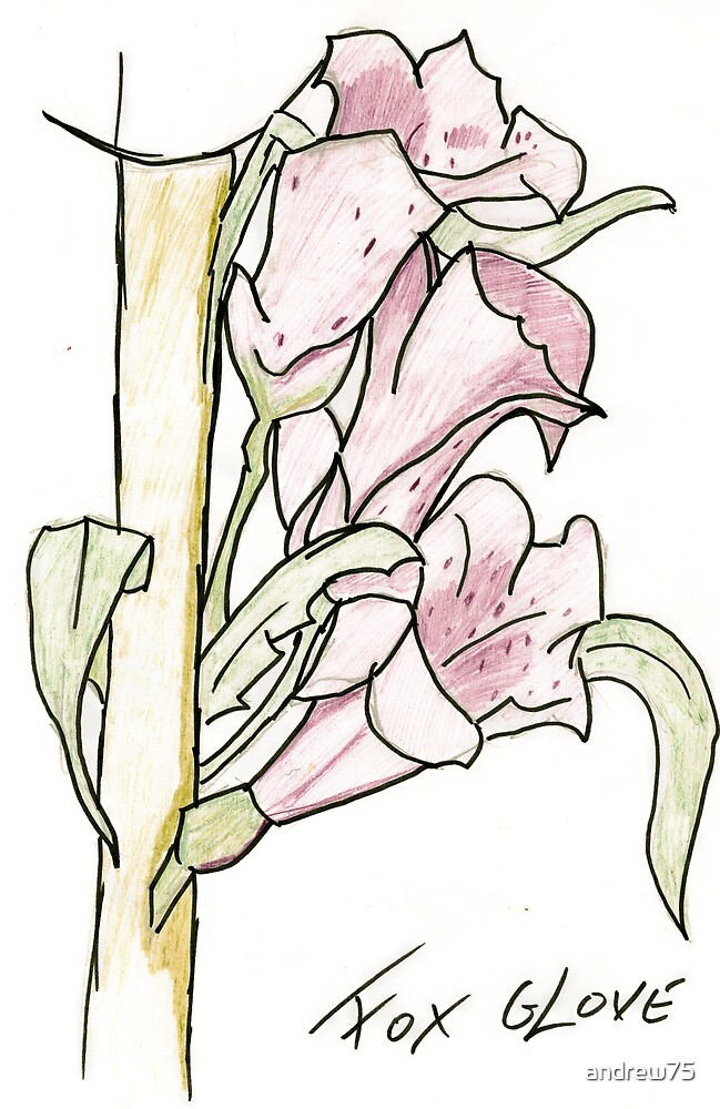 Foxglove by andrew75