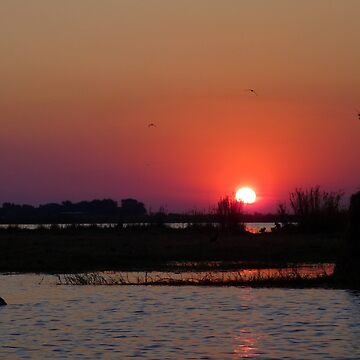Purple Haze - Sunset on the Chobe River by pennies4eles
