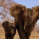'Mother and Baby' - Balule, South Africa by pennies4eles