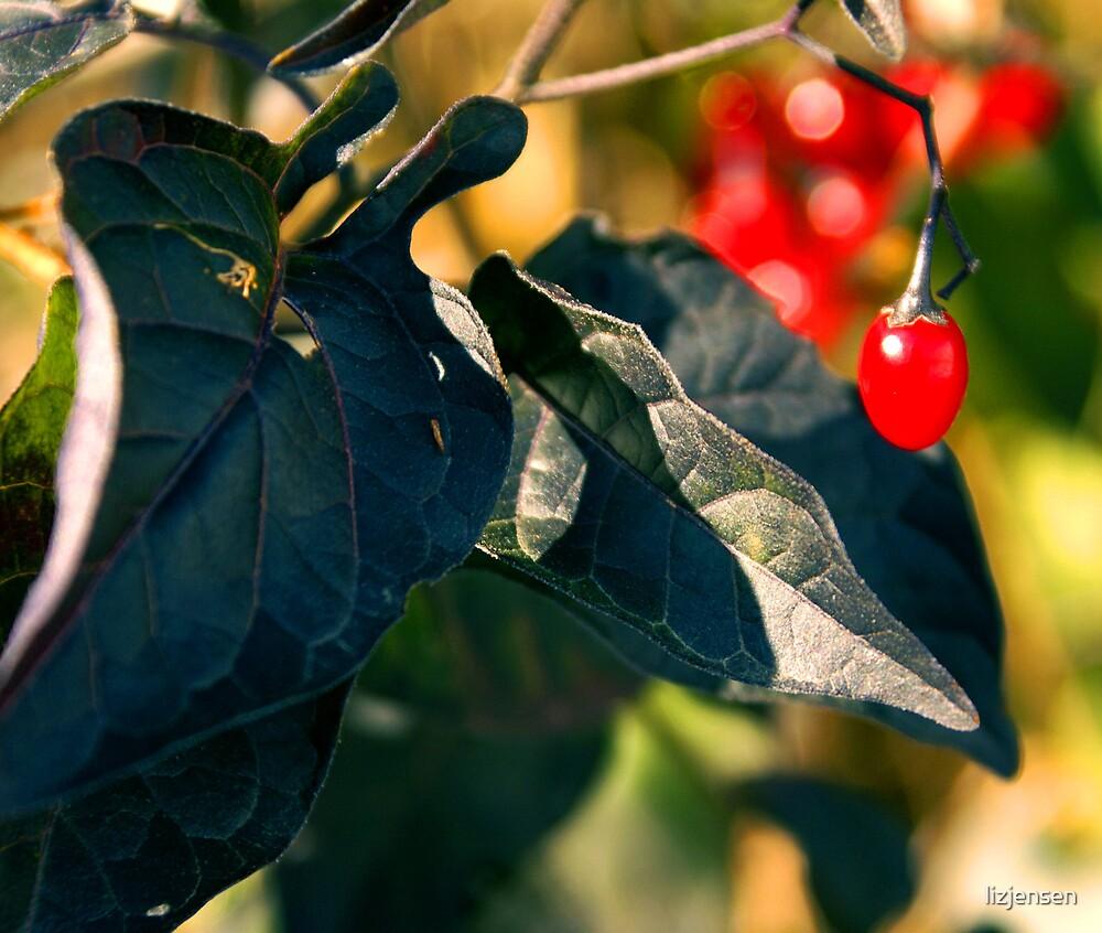 Berry by lizjensen