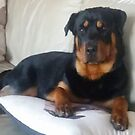 Roxie The Rottweiler by Mick Bull