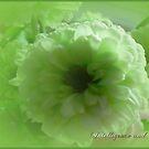 Floral May by EnchantedDreams