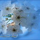 Floral December by EnchantedDreams