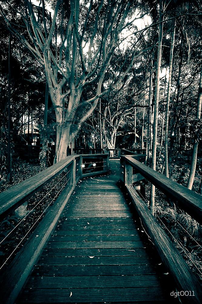 Rainforest Boardwalk by dgt0011