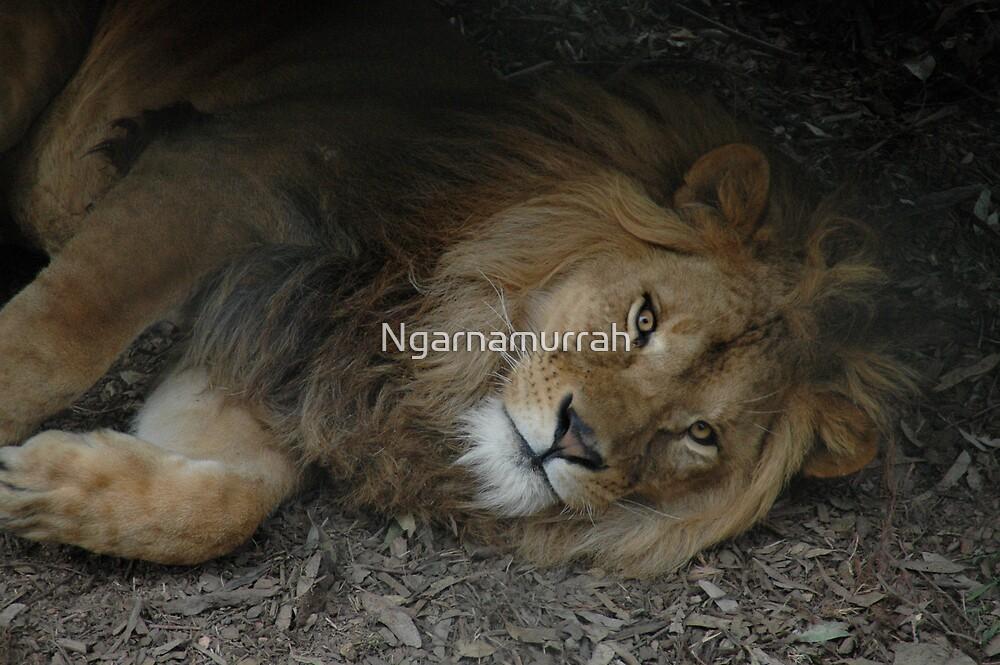 wrongfully imprisoned by Ngarnamurrah