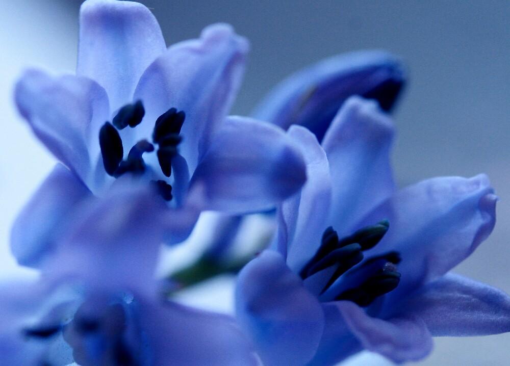 blue bells by JulesVandermaat
