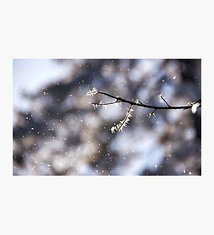 Snowflakes of joy Photographic Print
