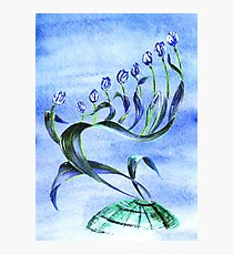 Flower Menorah Photographic Print