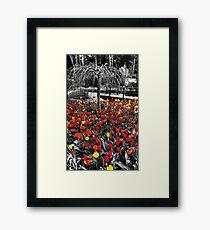 Coloured Framed Print
