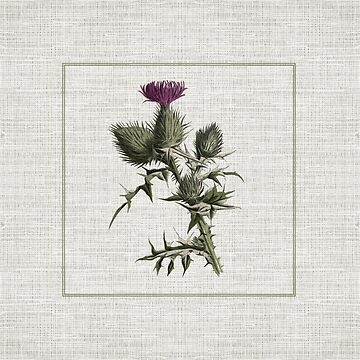 Outlander - thistle by laurathedrawer